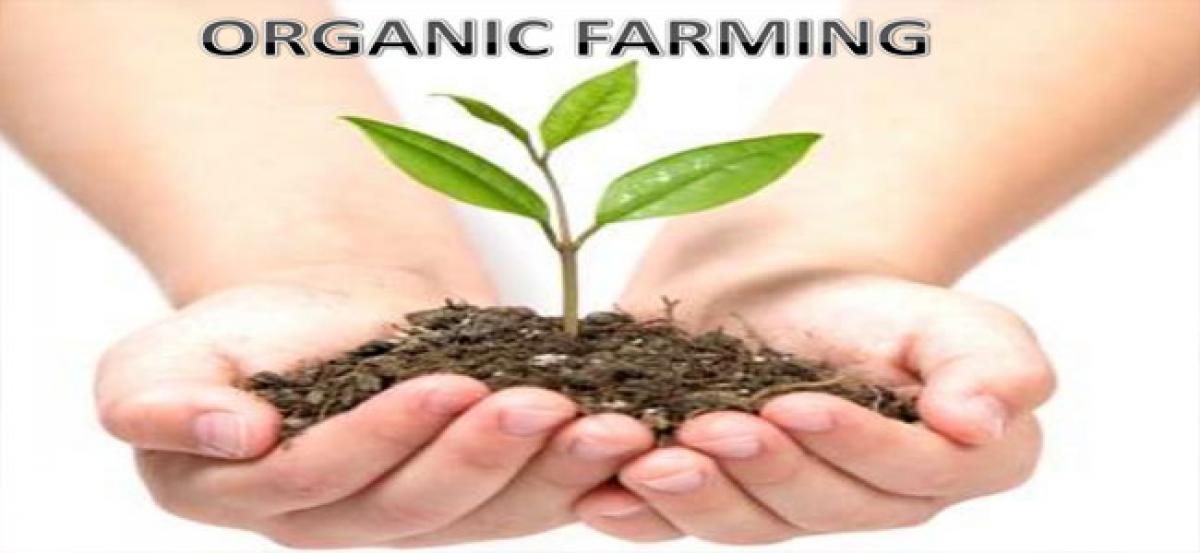 Organic farming gaining pace