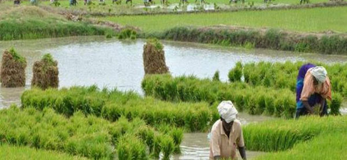 Cabinet hikes minimum support price of paddy by Rs 200 per quintal: sources
