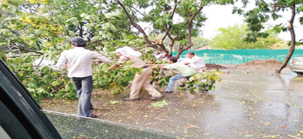 Heavy rain, winds uproot trees; power supply hit
