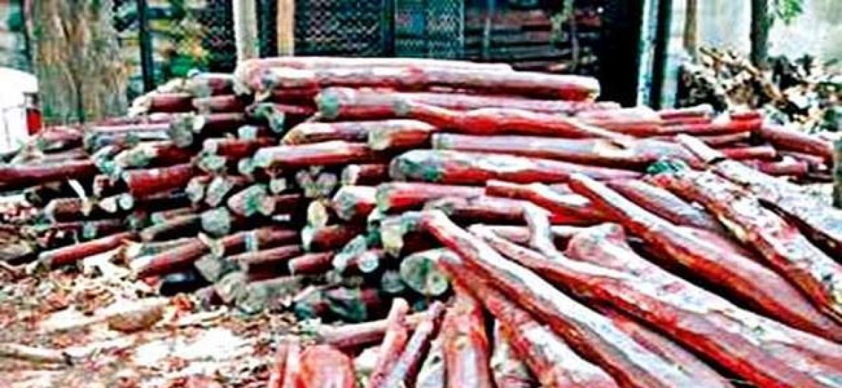 Five smugglers held; 16 red sanders logs seized