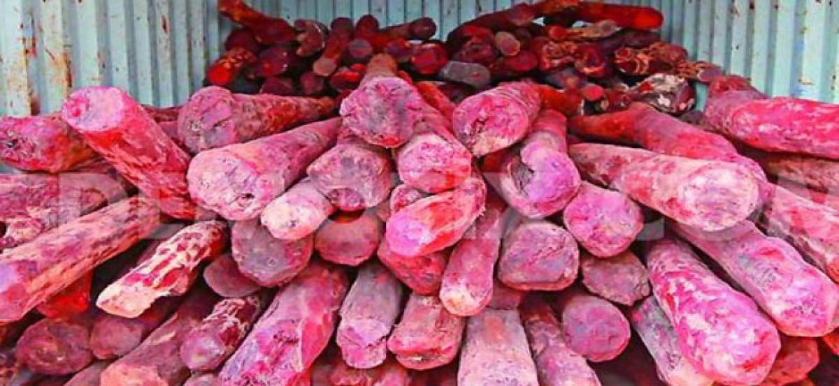 Vehicle with 21 red sanders logs seized