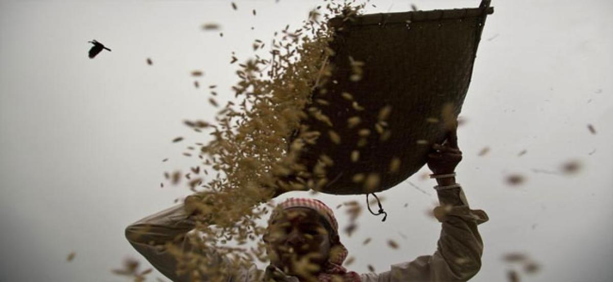 India underreported its market price support for wheat, rice: US tells WTO