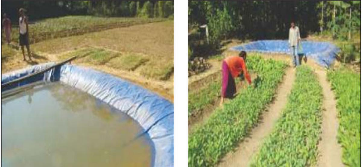 RWH pits, farm ponds help farmers in drought-hit areas