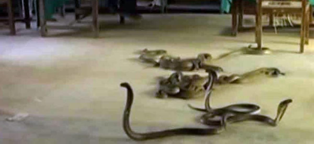 60 snakes found in schools kitchen in Maharashtra
