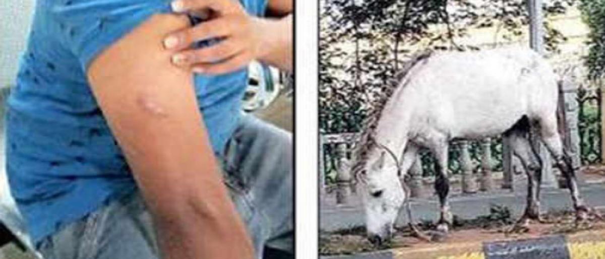 Mysuru: Stray horse goes wild and bites civilian