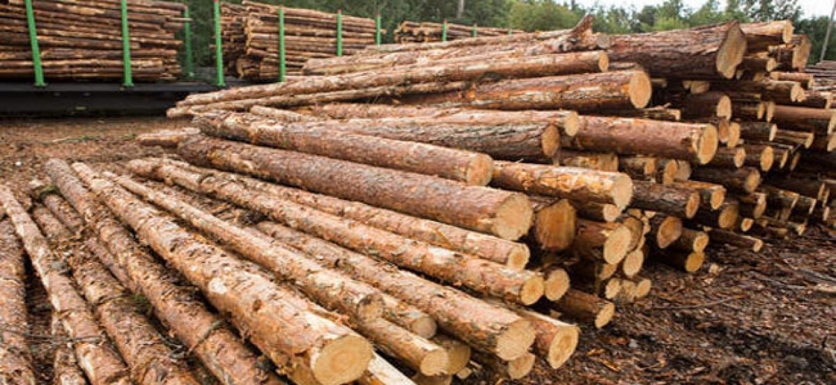 DRI officials 7 tonnes of casuarina wood logs and 528 brown packets at Vizag